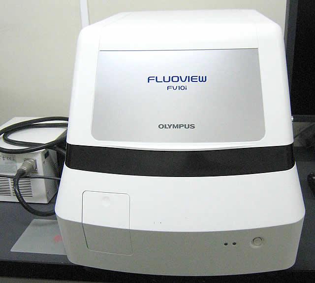 共焦点レーザー走査型顕微鏡FV10i(OLYMPUS社)
