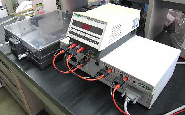 パルスフィールドゲル電気泳動装置 CHEF-DRIIシステム(BIO-RAD社)